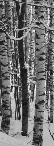 Vittorio Puggioni-Betulle nella neve