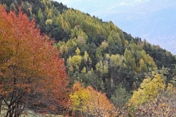 Vittorio Puggioni-Bosco in autunno-2383